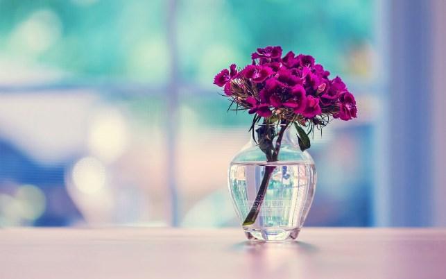 kak-sohranit-svezhest-cvetov-sekrety_1.jpg