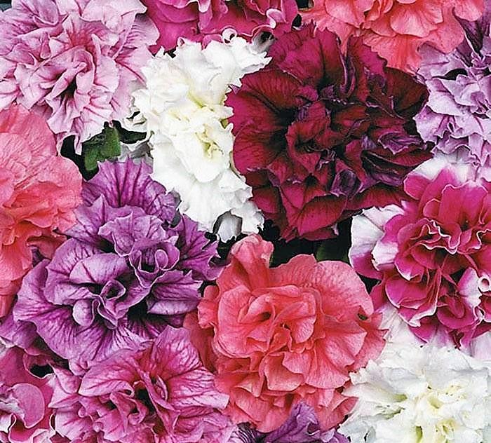 Экзотические цветы в вашем доме и саду