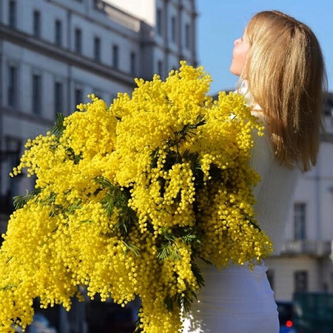 Мимоза - символ весны